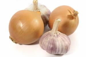 L'ail et l'oignon, des aliments toxiques pour votre animal